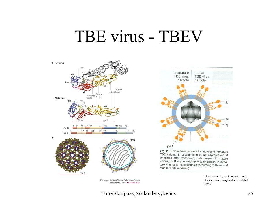TBE virus - TBEV Tone Skarpaas, Sørlandet sykehus Oschmann. Lyme borreliosis and Tick-borne Encephalitis. Uni-Med. 1999 25
