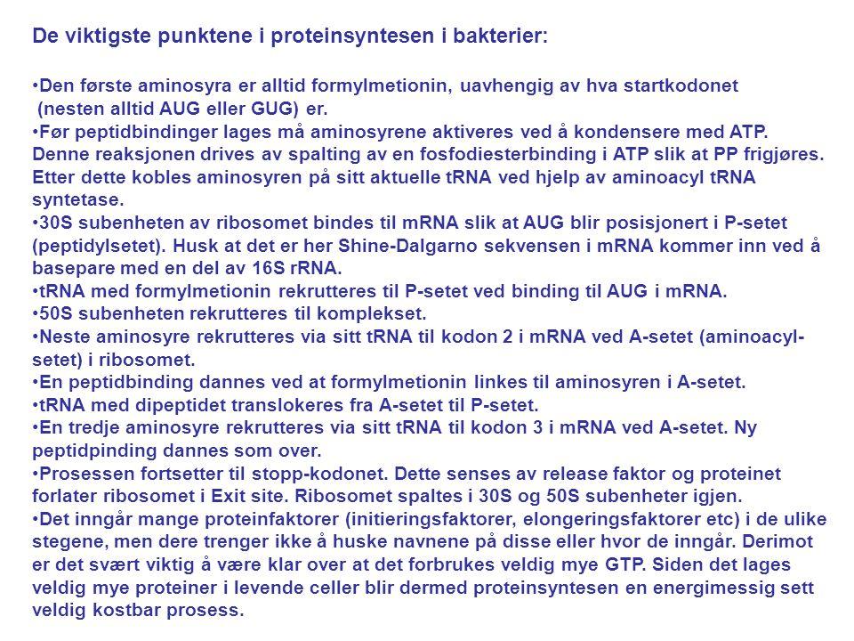 De viktigste punktene i proteinsyntesen i bakterier: Den første aminosyra er alltid formylmetionin, uavhengig av hva startkodonet (nesten alltid AUG e