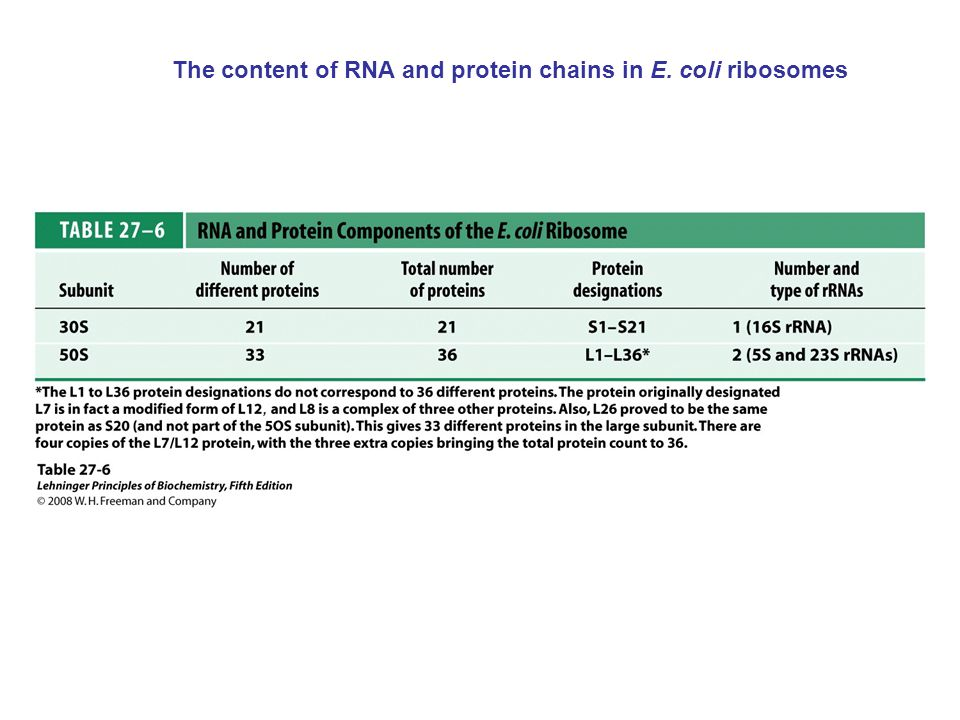 The content of RNA and protein chains in E. coli ribosomes