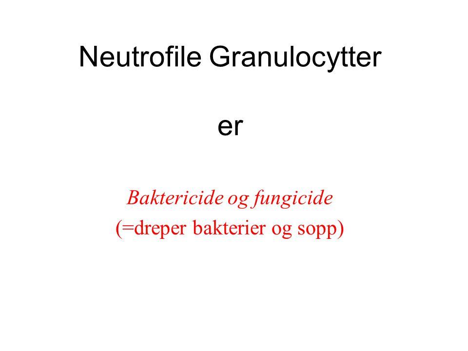 Neutrofile Granulocytter er Baktericide og fungicide (=dreper bakterier og sopp)