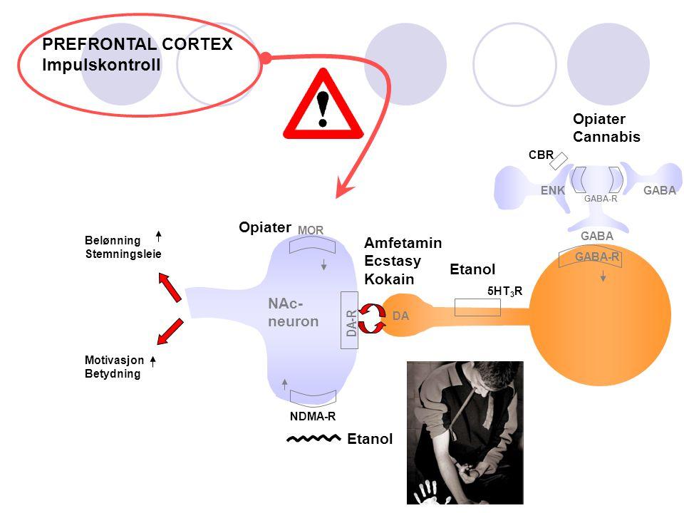 DA Etanol NDMA-R ENK GABA GABA-R Etanol 5HT 3 R NAc- neuron Belønning Stemningsleie Motivasjon Betydning Amfetamin Ecstasy Kokain DA-R GABA-R GABA MOR