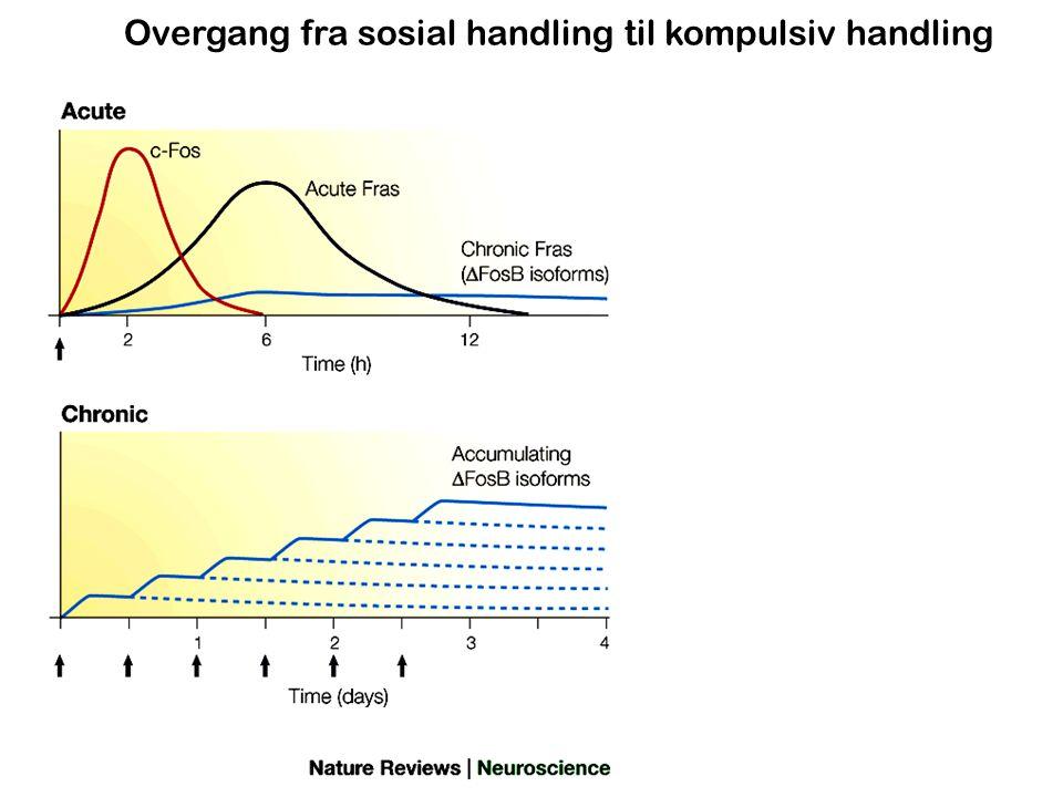 Overgang fra sosial handling til kompulsiv handling