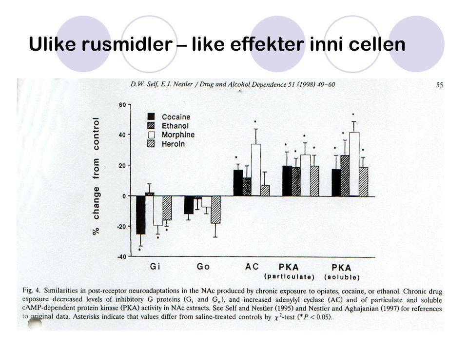 Ulike rusmidler – like effekter inni cellen
