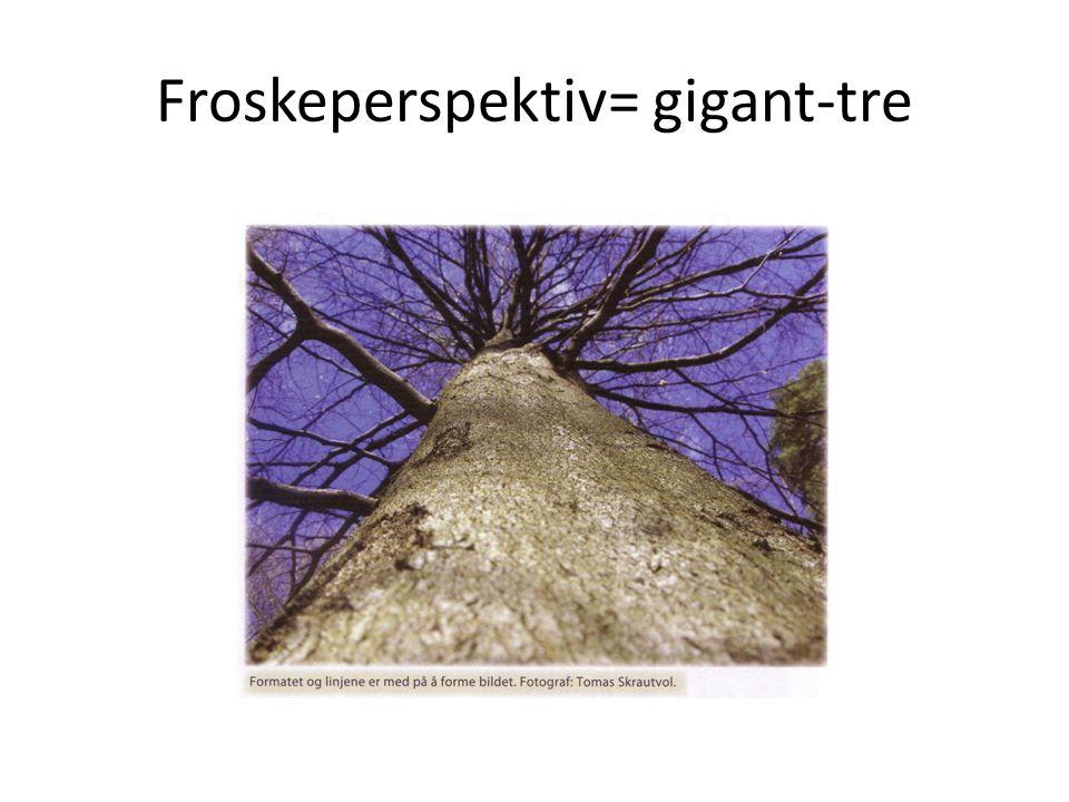Froskeperspektiv= gigant-tre