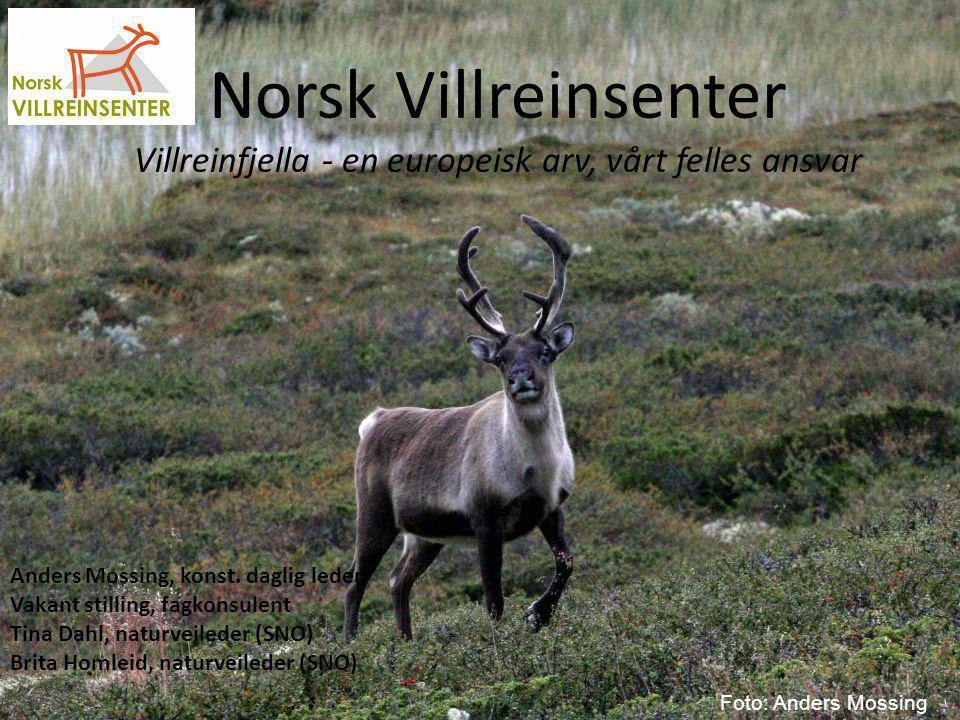 Estimert tregrense + topografiske tilpasninger Norsk Villreinsenter Sør, Skinnarbu, 3660 Rjukan, Daglig leder Anders Mossing, anders.mossing@villrein.no, 35080582/95896361