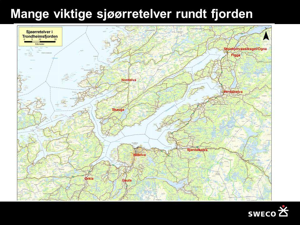 Mange viktige sjøørretelver rundt fjorden