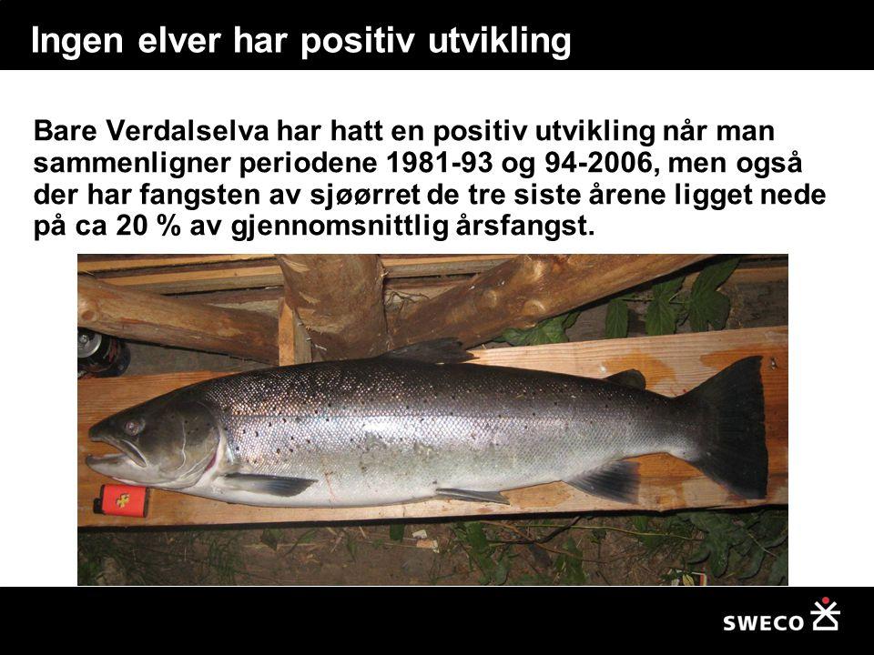 Ingen elver har positiv utvikling Bare Verdalselva har hatt en positiv utvikling når man sammenligner periodene 1981-93 og 94-2006, men også der har fangsten av sjøørret de tre siste årene ligget nede på ca 20 % av gjennomsnittlig årsfangst.