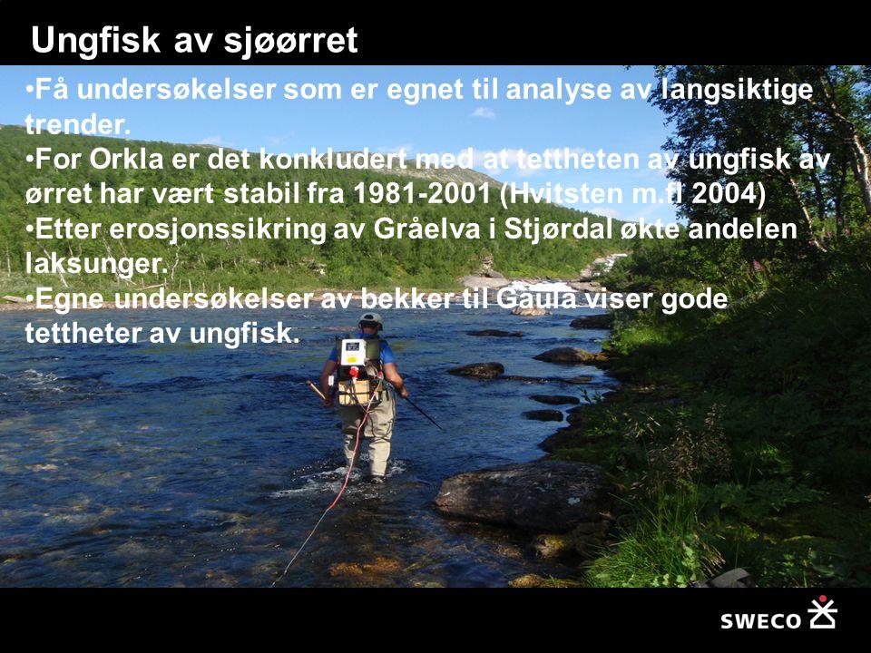 Ungfisk av sjøørret Få undersøkelser som er egnet til analyse av langsiktige trender.