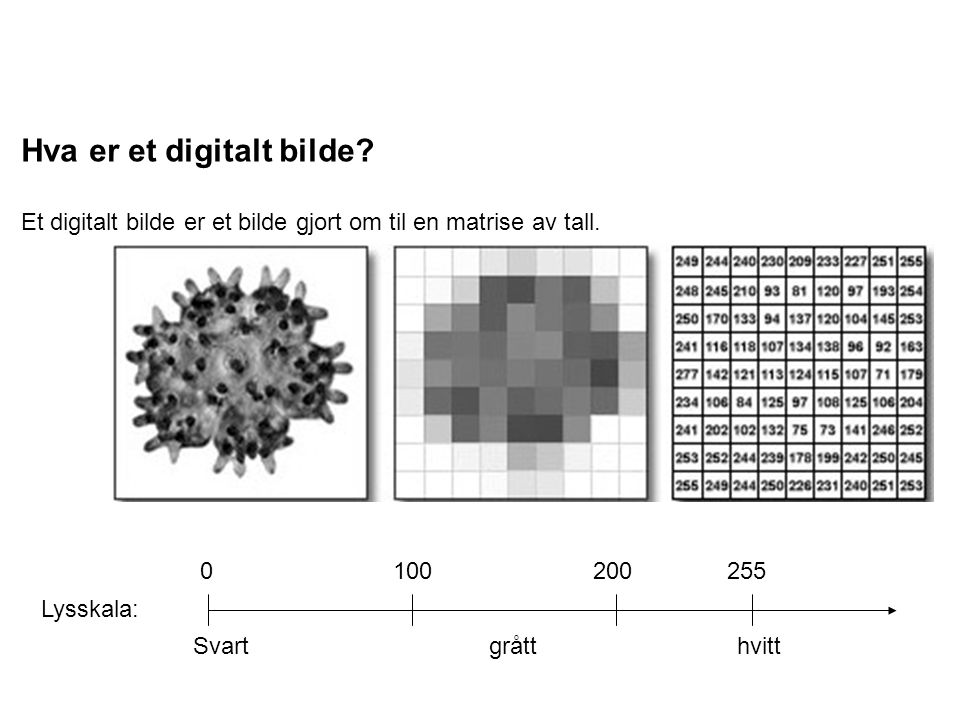 Hva er et digitalt bilde? Et digitalt bilde er et bilde gjort om til en matrise av tall. Lysskala: 0 100 200 255 Svart grått hvitt