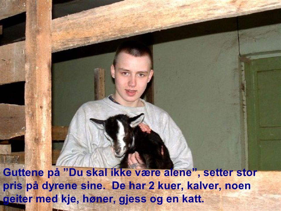 """Guttene på """"Du skal ikke være alene"""", setter stor pris på dyrene sine. De har 2 kuer, kalver, noen geiter med kje, høner, gjess og en katt."""