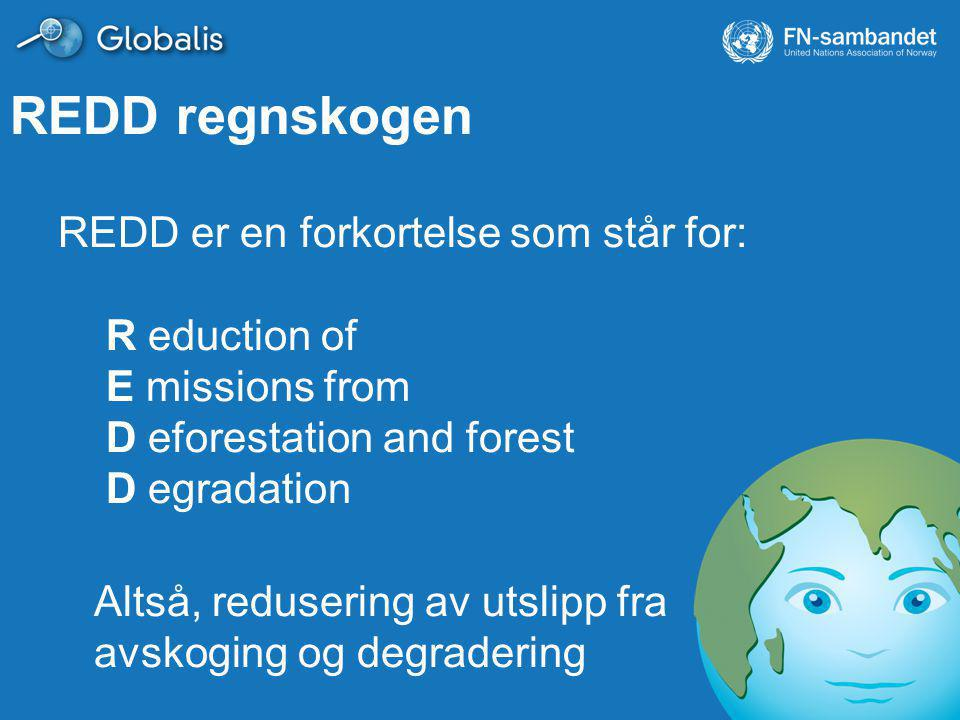 REDD regnskogen REDD er en forkortelse som står for: R eduction of E missions from D eforestation and forest D egradation Altså, redusering av utslipp