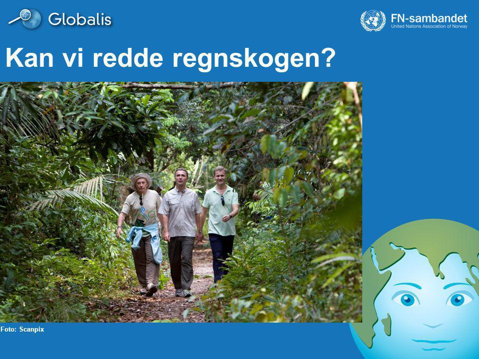 Kan vi redde regnskogen? Foto: Scanpix