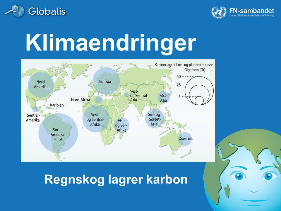 Klimaendringer Regnskog lagrer karbon