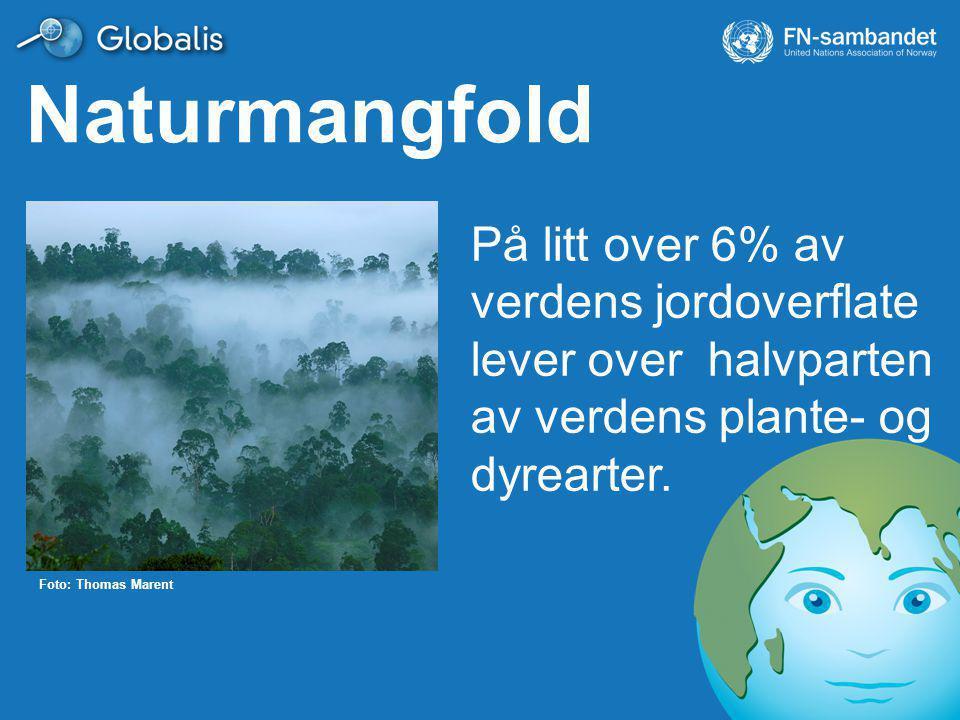 På litt over 6% av verdens jordoverflate lever over halvparten av verdens plante- og dyrearter.