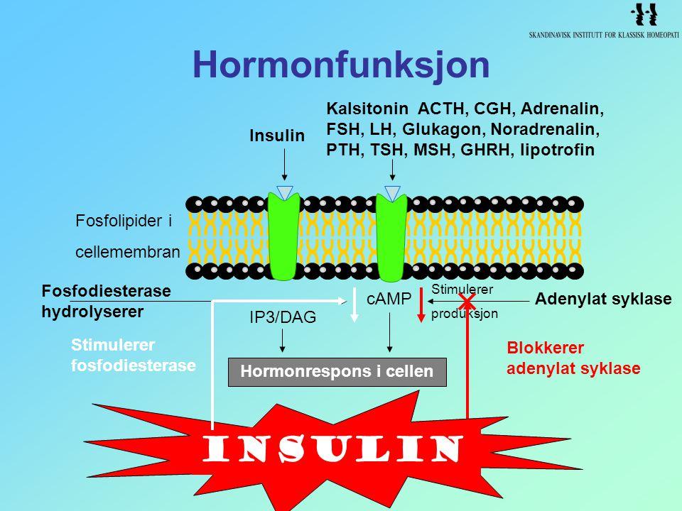 Hormonfunksjon IP3/DAG Hormonrespons i cellen cAMPAdenylat syklase Blokkerer adenylat syklase Stimulerer produksjon Kalsitonin ACTH, CGH, Adrenalin, F