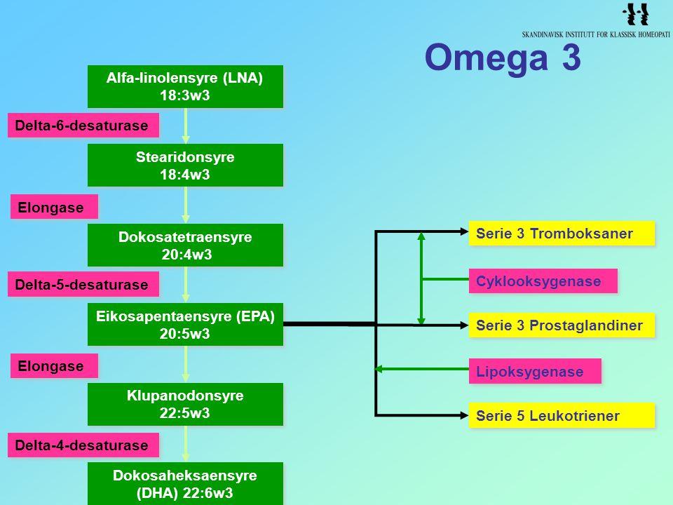 Omega 3 Serie 3 Prostaglandiner Serie 3 Tromboksaner Serie 5 Leukotriener Lipoksygenase Cyklooksygenase Alfa-linolensyre (LNA) 18:3w3 Alfa-linolensyre