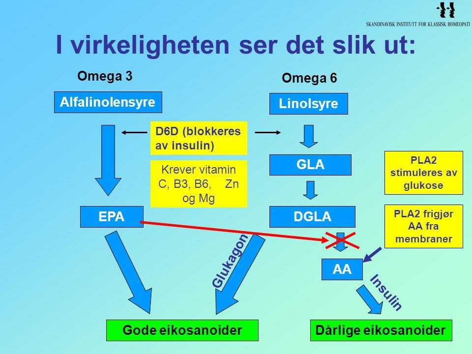 I virkeligheten ser det slik ut: EPA Gode eikosanoiderDårlige eikosanoider Glukagon Insulin GLA Linolsyre AA DGLA Omega 6 Alfalinolensyre Omega 3 Krev