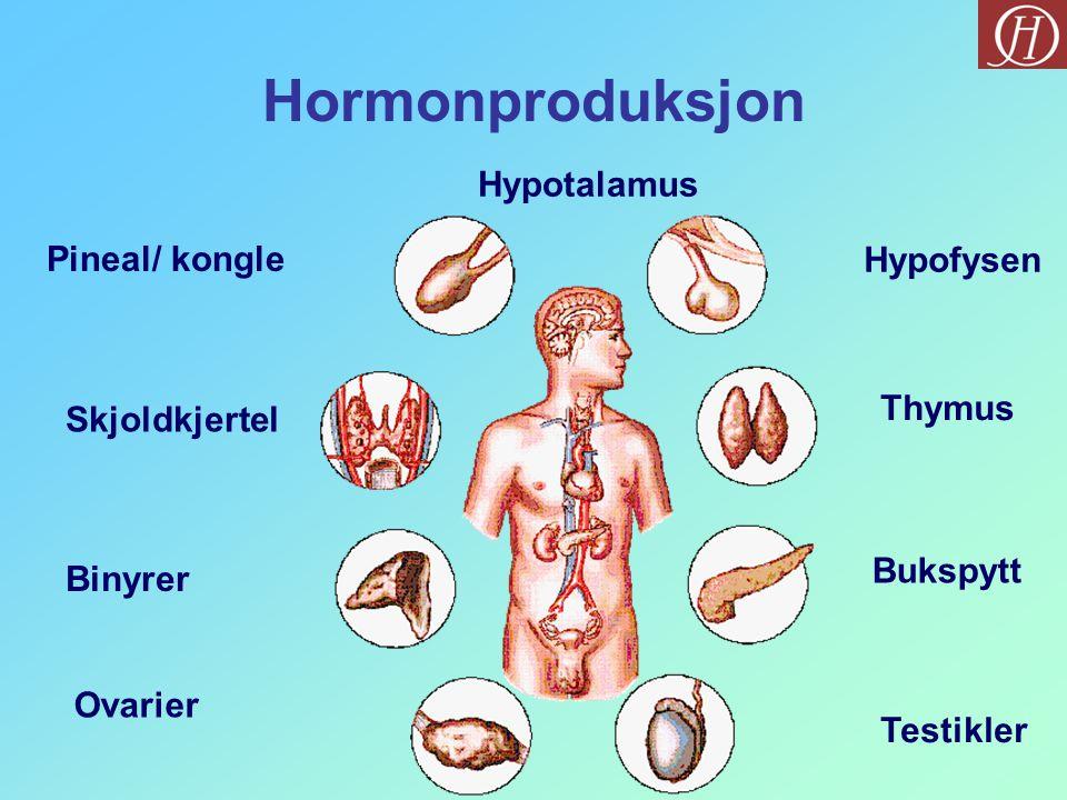 Hormonproduksjon Thymus Bukspytt Skjoldkjertel Hypofysen Binyrer Testikler Pineal/ kongle Ovarier Hypotalamus