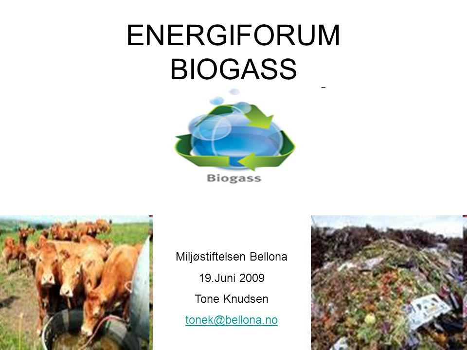 ENERGIFORUM BIOGASS Miljøstiftelsen Bellona 19.Juni 2009 Tone Knudsen tonek@bellona.no