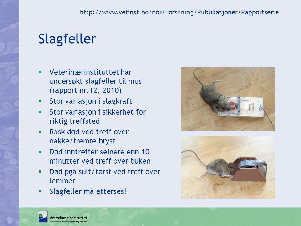 Slagfeller  Veterinærinstituttet har undersøkt slagfeller til mus (rapport nr.12, 2010)  Stor variasjon i slagkraft  Stor variasjon i sikkerhet for