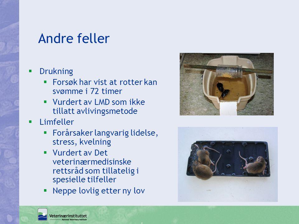Andre feller  Drukning  Forsøk har vist at rotter kan svømme i 72 timer  Vurdert av LMD som ikke tillatt avlivingsmetode  Limfeller  Forårsaker l