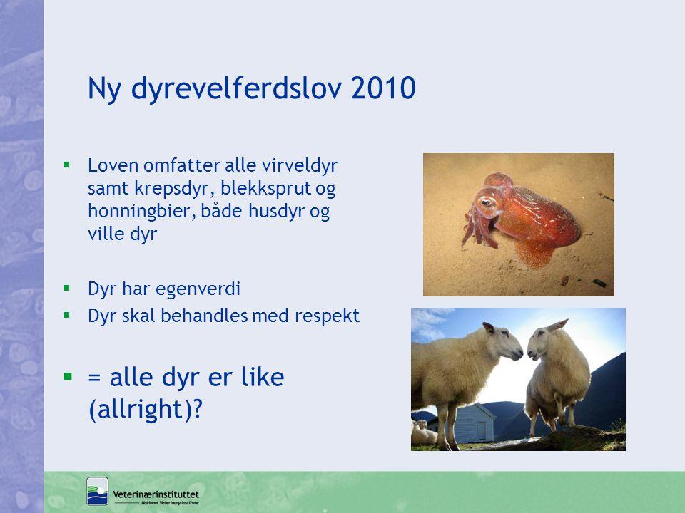 Ny dyrevelferdslov 2010  Loven omfatter alle virveldyr samt krepsdyr, blekksprut og honningbier, både husdyr og ville dyr  Dyr har egenverdi  Dyr s