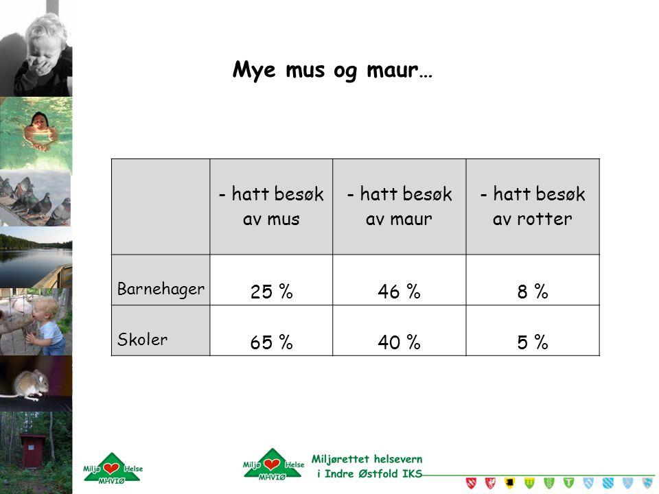Mye mus og maur… - hatt besøk av mus - hatt besøk av maur - hatt besøk av rotter Barnehager 25 %46 %8 % Skoler 65 %40 %5 %