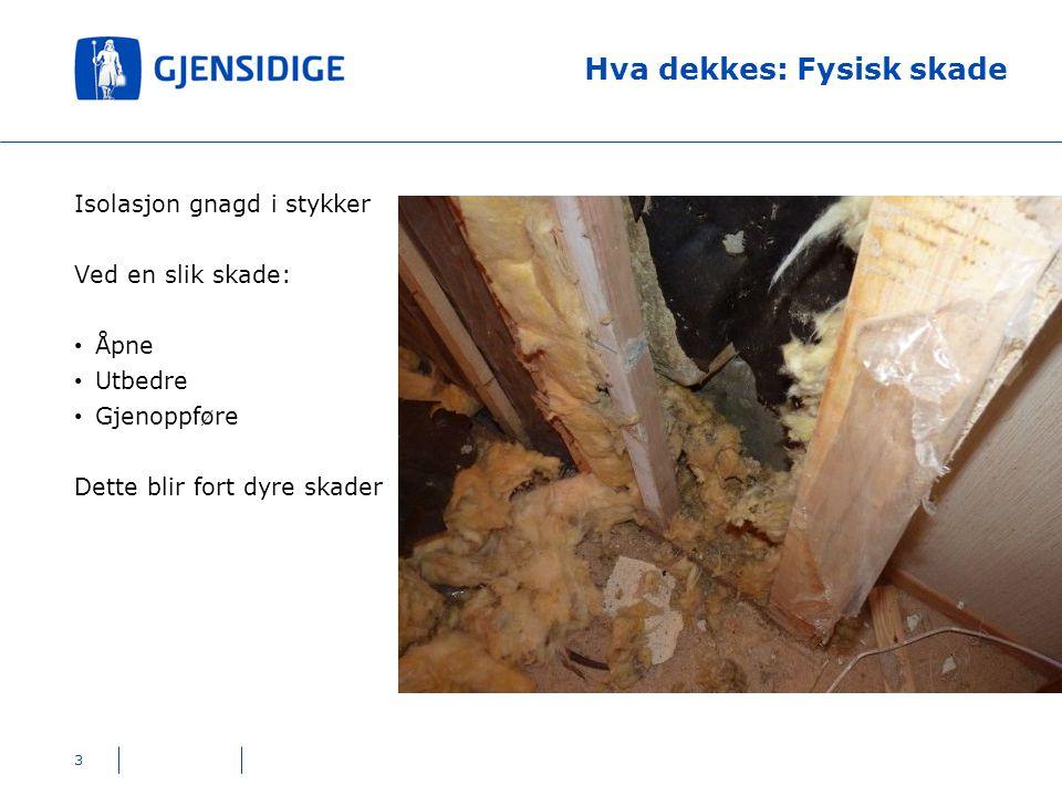 Hva dekkes: Fysisk skade 4 Avføring og gnageskader etter at rotter har oppholdt seg i etasjeskille Like viktig som utbedring: - hvordan kommer rottene seg inn i bygget.
