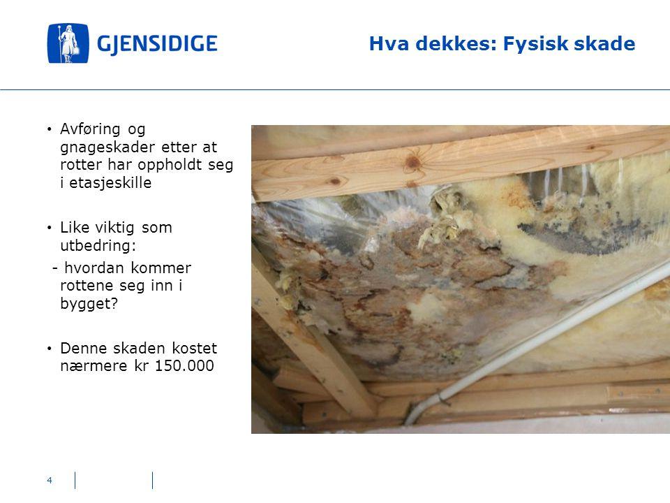 Hva dekkes: Fysisk skade 4 Avføring og gnageskader etter at rotter har oppholdt seg i etasjeskille Like viktig som utbedring: - hvordan kommer rottene
