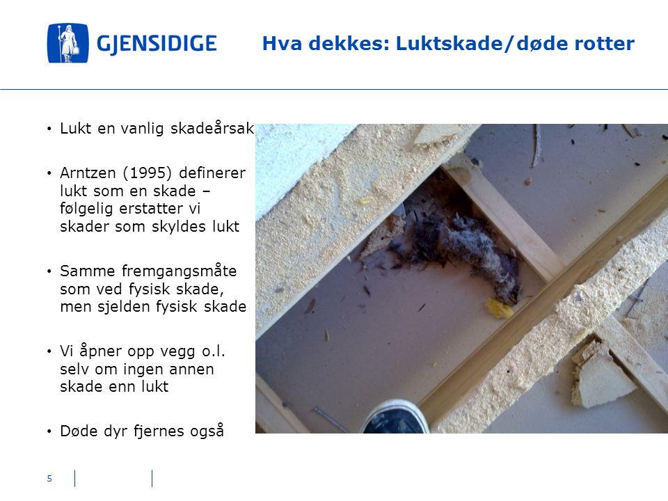 Hva dekkes: Luktskade/døde rotter 5 Lukt en vanlig skadeårsak Arntzen (1995) definerer lukt som en skade – følgelig erstatter vi skader som skyldes lu