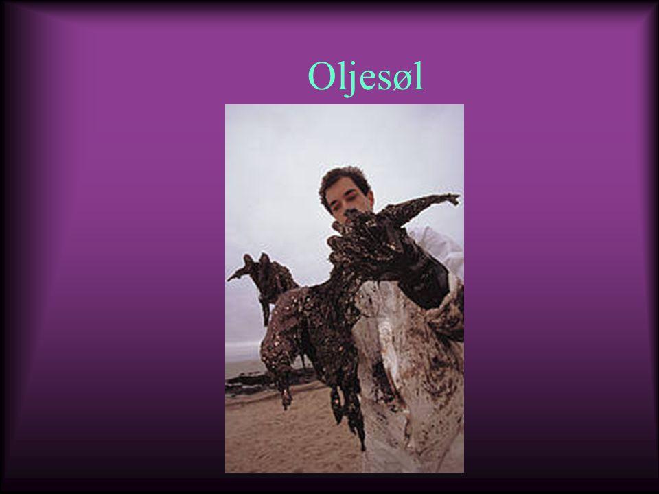 Oljesøl
