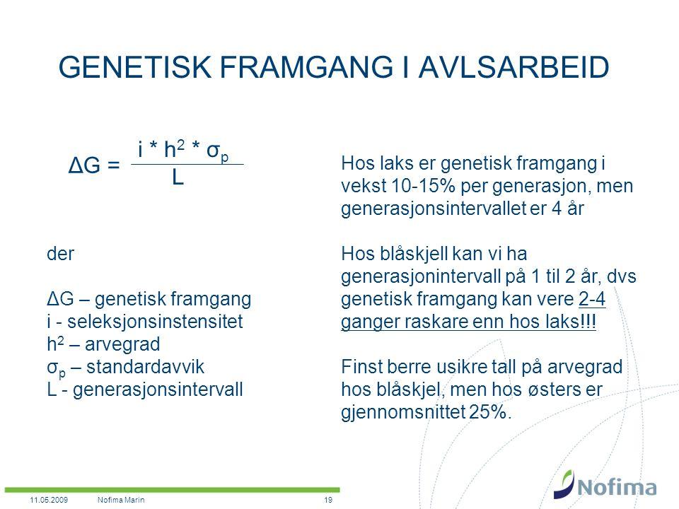 11.05.2009Nofima Marin19 GENETISK FRAMGANG I AVLSARBEID i * h 2 * σ p L ΔG = der ΔG – genetisk framgang i - seleksjonsinstensitet h 2 – arvegrad σ p – standardavvik L - generasjonsintervall Hos laks er genetisk framgang i vekst 10-15% per generasjon, men generasjonsintervallet er 4 år Hos blåskjell kan vi ha generasjonintervall på 1 til 2 år, dvs genetisk framgang kan vere 2-4 ganger raskare enn hos laks!!.