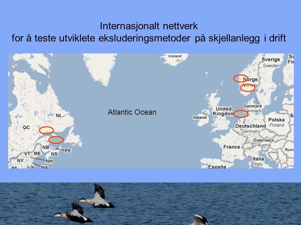 NINA S.A.Hanssen Regelverk Nettverks Koordinatør J.