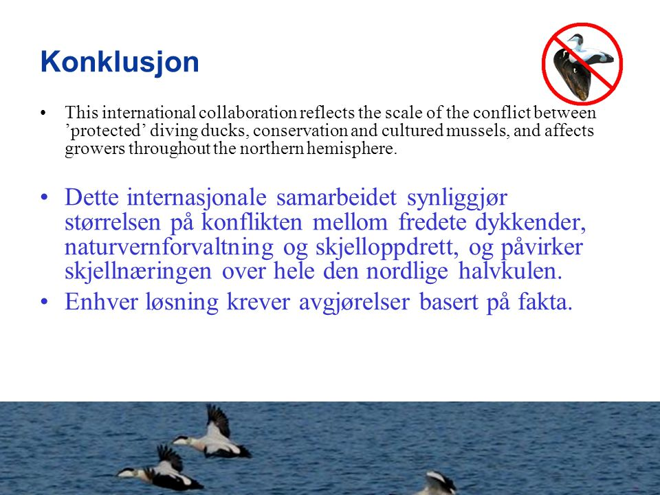 Konklusjon This international collaboration reflects the scale of the conflict between 'protected' diving ducks, conservation and cultured mussels, an