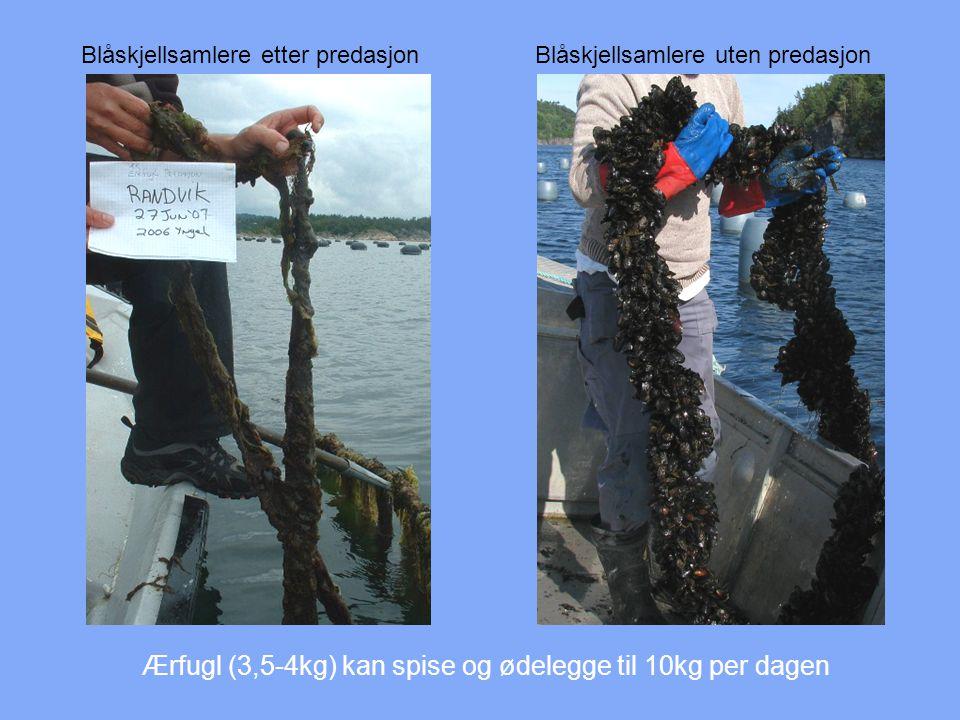 Metoder Akustiske metoder Sperrenett Kjemikalier Kombinasjoner og alternativer Shellfish Solutions AS