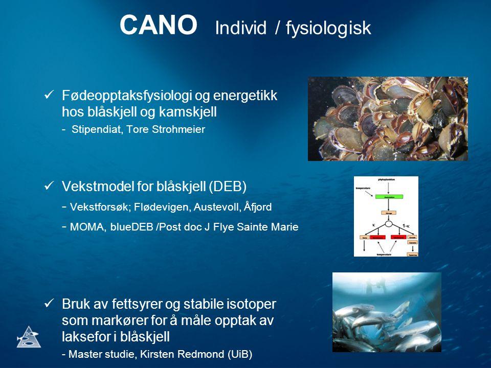 CANO Individ / fysiologisk Fødeopptaksfysiologi og energetikk hos blåskjell og kamskjell - Stipendiat, Tore Strohmeier Vekstmodel for blåskjell (DEB)