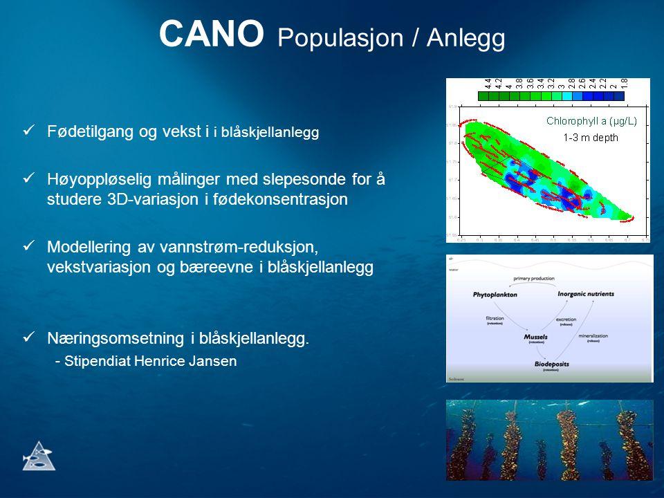 CANO Populasjon / Anlegg Fødetilgang og vekst i i blåskjellanlegg Høyoppløselig målinger med slepesonde for å studere 3D-variasjon i fødekonsentrasjon