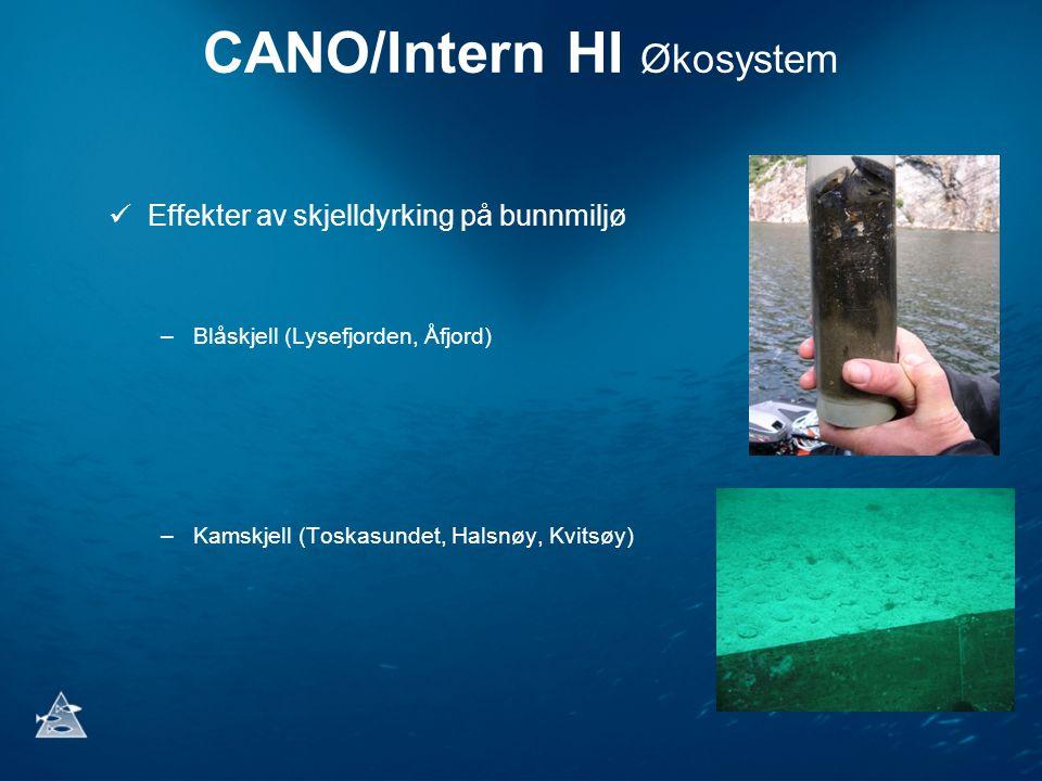 CANO/Intern HI Økosystem Effekter av skjelldyrking på bunnmiljø –Blåskjell (Lysefjorden, Åfjord) –Kamskjell (Toskasundet, Halsnøy, Kvitsøy)