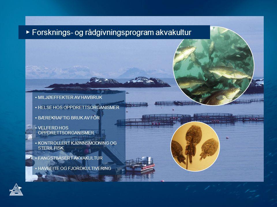 ▶ Forsknings- og rådgivningsprogram akvakultur MILJØEFFEKTER AV HAVBRUK HELSE HOS OPPDRETTSORGANISMER BÆREKRAFTIG BRUK AV FÔR VELFERD HOS OPPDRETTSORG
