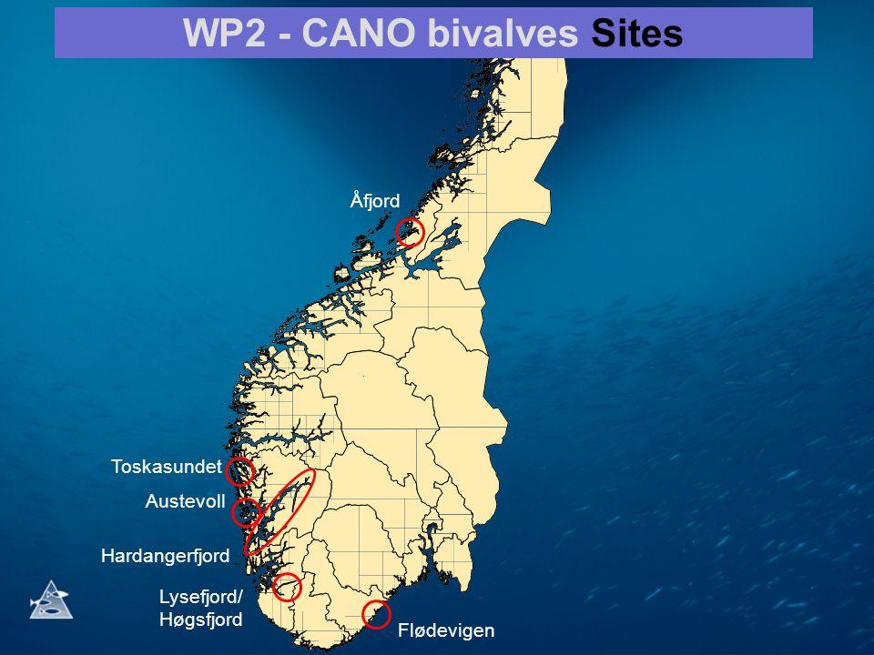 Åfjord Hardangerfjord Lysefjord/ Høgsfjord WP2 - CANO bivalves Sites Austevoll Toskasundet Flødevigen
