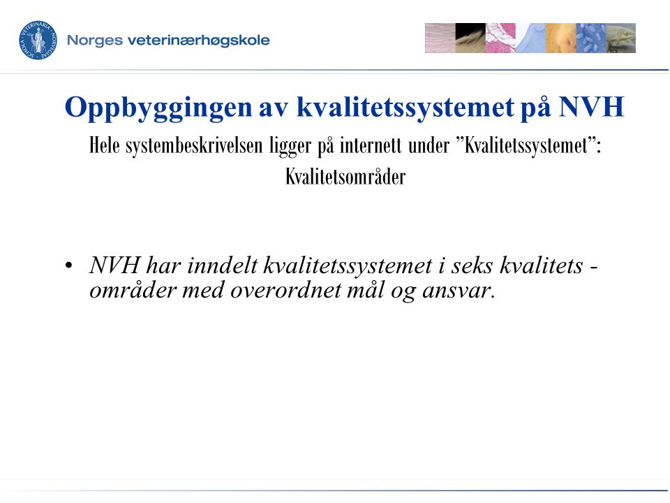 Oppbyggingen av kvalitetssystemet på NVH NVH har inndelt kvalitetssystemet i seks kvalitets - områder med overordnet mål og ansvar.