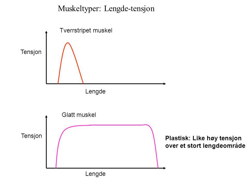 Tensjon Lengde Tverrstripet muskel Glatt muskel Plastisk: Like høy tensjon over et stort lengdeområde Muskeltyper: Lengde-tensjon
