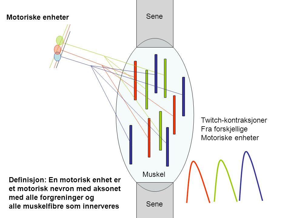 Sene Muskel Motoriske enheter Definisjon: En motorisk enhet er et motorisk nevron med aksonet med alle forgreninger og alle muskelfibre som innerveres