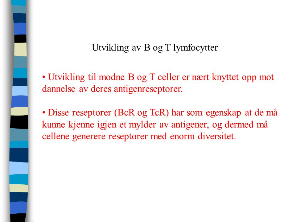 T B T B B B B T T T Stamceller Umoden progenitorceller Modne lymfocytter Aktiverte lymfocytter Antigen uavhengigfase Antigen avhengig fase Utvikling a