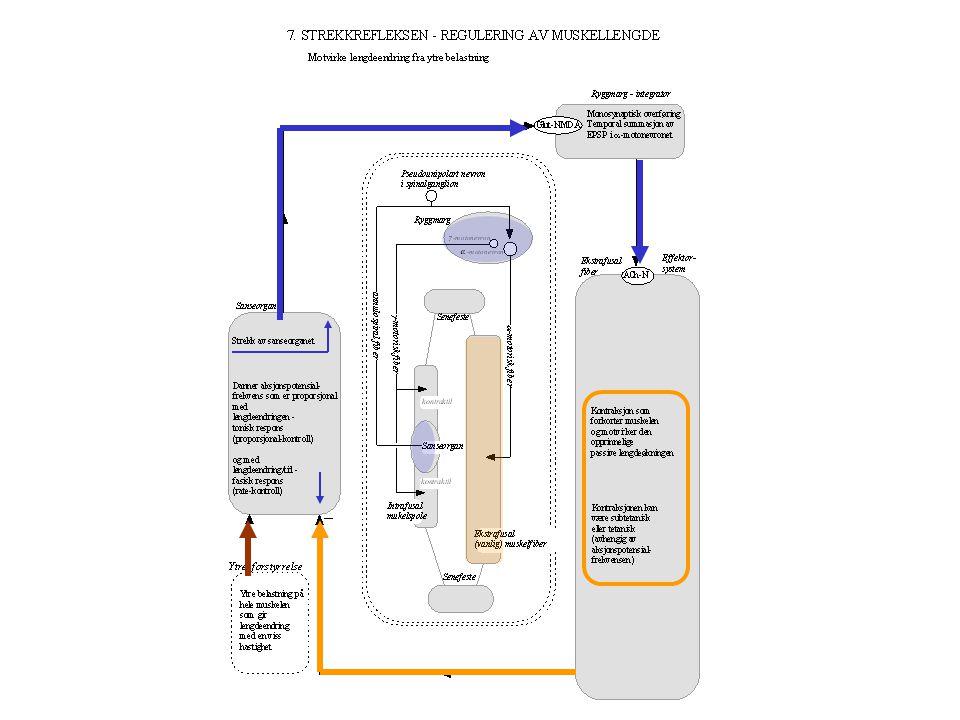 Energi Informasjon Energi Ytre forstyrrelse SensorIntegrator Effektor Informasjon Energi/informasjon