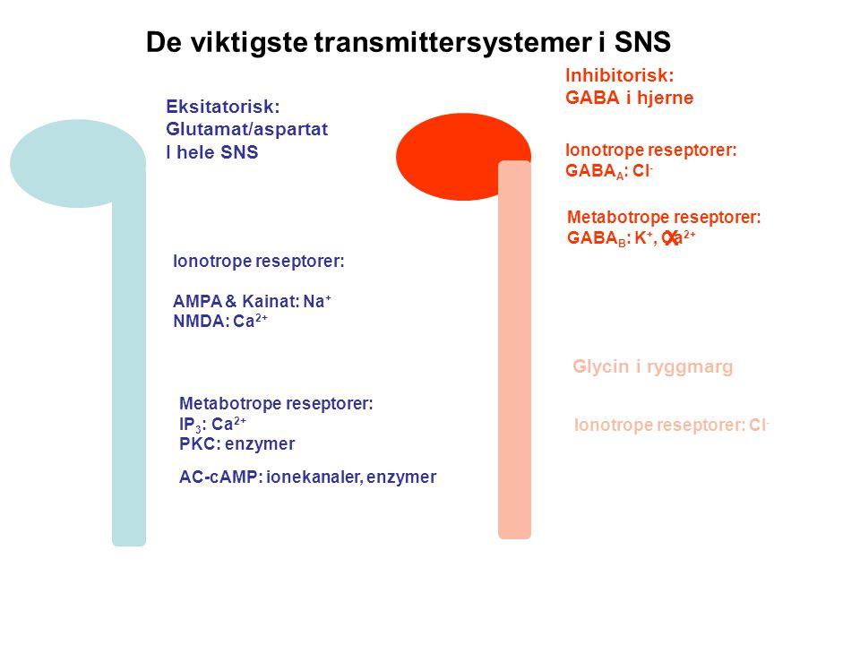 De viktigste transmittersystemer i SNS Eksitatorisk: Glutamat/aspartat I hele SNS Inhibitorisk: GABA i hjerne Glycin i ryggmarg Ionotrope reseptorer: AMPA & Kainat: Na + NMDA: Ca 2+ Metabotrope reseptorer: IP 3 : Ca 2+ PKC: enzymer AC-cAMP: ionekanaler, enzymer Ionotrope reseptorer: GABA A : Cl - Metabotrope reseptorer: GABA B : K +, Ca 2+ Ionotrope reseptorer: Cl - X