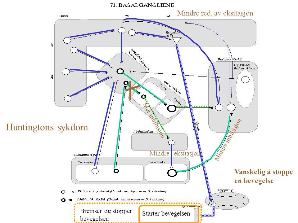 Parkinsons sykdom M i n d r e i n h i b i s j o n Mer inhibisjon Mindre eksitasjon Vanskeligere å starte bevegelse M e r i n h. M i n d r e i n h. M e