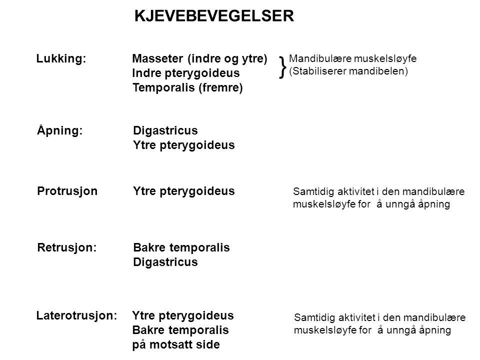 Lukking:Masseter (indre og ytre) Indre pterygoideus Temporalis (fremre) } Mandibulære muskelsløyfe (Stabiliserer mandibelen) Åpning:Digastricus Ytre p