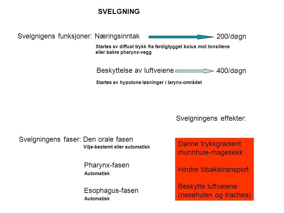 Svelgnigens funksjoner: Næringsinntak Beskyttelse av luftveiene 200/døgn 400/døgn SVELGNING Svelgningens faser: Den orale fasen Pharynx-fasen Esophagu