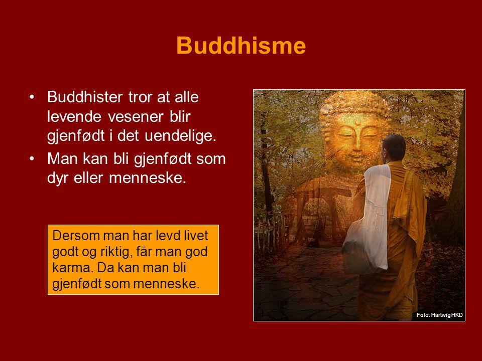 Buddhisme Buddhister tror at alle levende vesener blir gjenfødt i det uendelige. Man kan bli gjenfødt som dyr eller menneske. Dersom man har levd live